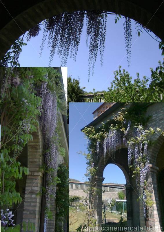 glicine monastero